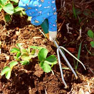 garden-fruit-planting-tips0