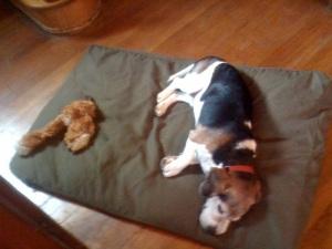 otis on bed with fox