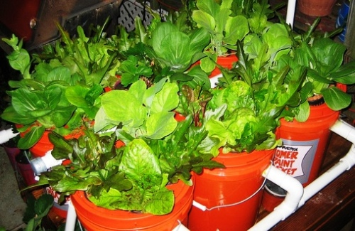 5-gallon-bucket-aquaponics